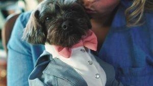 Wedding Dog Tuxedo